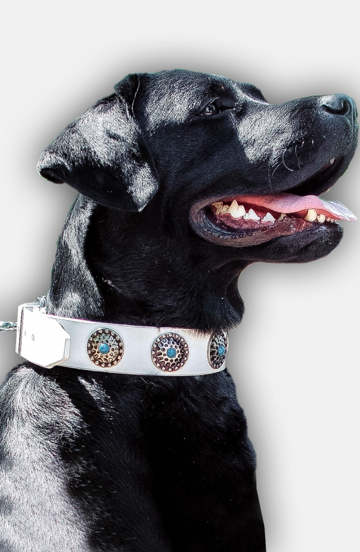 Get White Leather American Bulldog Collar With Blue Stones