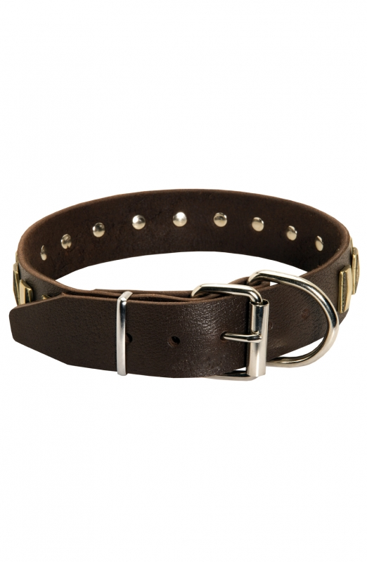 Designer leather dog collar with small brass plates old - Designer small dog collars ...