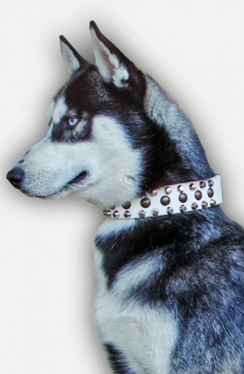 White Leather Dog Collar with 3 Rows of Pyramids and Studs