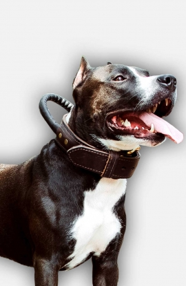 Agitation Training Amstaff Collar Made of Double Leather