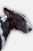 Elegant Leather Bull Terrier Collar