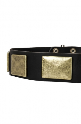 Vintage Leather Dog Collar with Massive Brass Plates 1 ½ inch Wide
