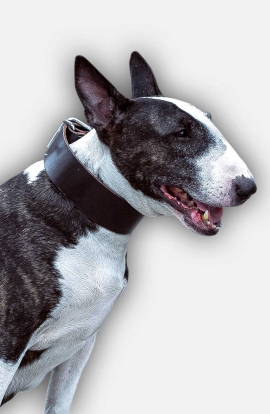 1.5 inch Wide Simple Design Wide Leather Collar for Bull Terrier