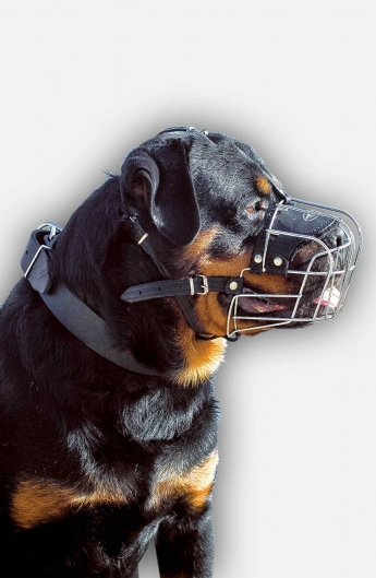 Rottweiler Collar for Obedience Training and Regular Walking