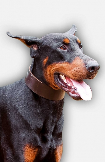Wide Walking Leather Doberman Collar