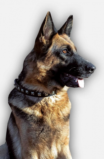 Cool Leather German Shepherd Collar with 1 Row Nickel Studs