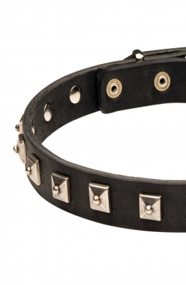 Rottweiler Leather Collar with Hand Set Nickel Studs