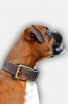 2ply Leather Boxer Collar with Fur Protection Plate
