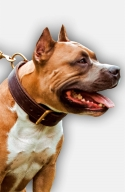 Amstaff 2ply Leather Dog Collar with Fur Protection Plate