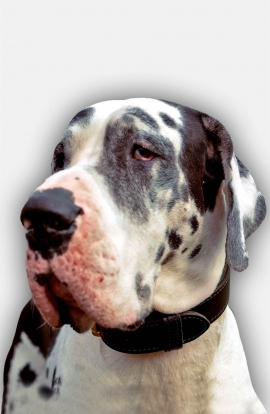 Buy 2 ply Leather Great Dane Collar for Training