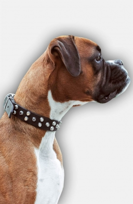 Boxer Leather Dog Collar with 3 Rows of Nickel Pyramids