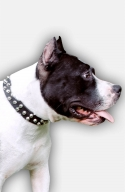 Amstaff Collar with 3 Rows of Nickel Pyramids