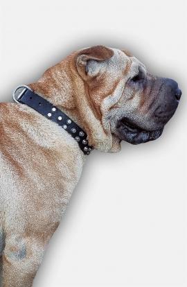 Shar Pei Leather Dog Collar with Nickel Pyramids