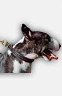 English Bull Terrier 2 Ply Leather Choke Dog Collar with Braids