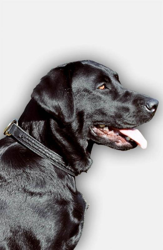 Buy 2 Ply Leather Choke Collar For Labrador Dog Training