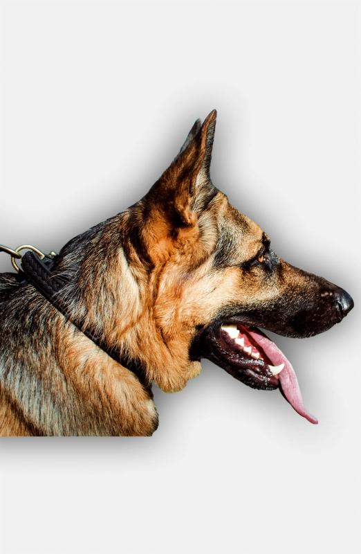 2 Ply Leather German Shepherd Collar Braided Collars