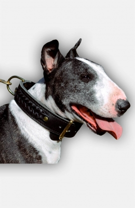 2 ply Leather English Bull Terrier Collar with Braids