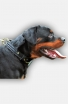 Leather Rottweiler Collar with Fur Protection Plate