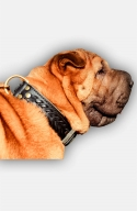 2 ply Leather Shar Pei Collar with Fur Protection Plate.