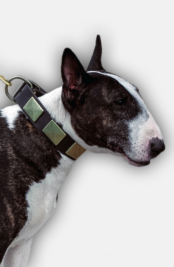 English Bull Terrier Collar with Vintage Brass Plates