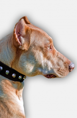 Pitbull Collar with Silver-like Pyramids