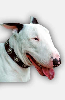 English Bull Terrier Collar with Vintage Nickel Conchos