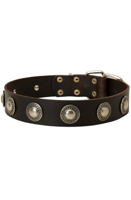 Shar Pei Leather Dog Collar with One Row Vintage Conchos