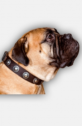 Bullmastiff Collar with One Row Vintage Conchos
