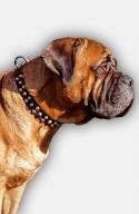 Exclusive Bullmastiff Decorated Dog Collar