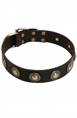 Designer Great Dane Leather Dog Collar with Nickel Conchos