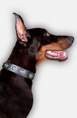 Doberman Collar with Silver Plated Circles and Blue Stones