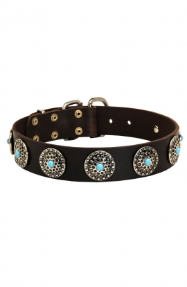 Stylish Wide Leather Collar with Blue Stones for Rottweiler