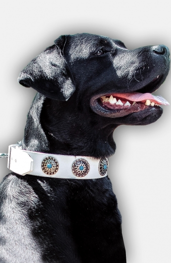 Cool White Leather Labrador Collar with Blue Stones
