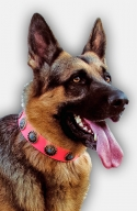 Pink Leather German Shepherd Collar with Blue Stones