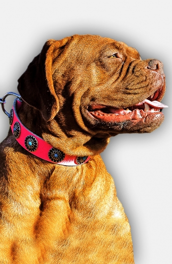 Pink Leather Mastiff Collar with Silver-like Circles and Blue Stones