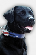 Labrador Handpainted Leather Collar - American Pride
