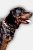 Rottweiler Handpainted Leather Collar - American Pride