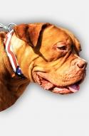 Mastiff Handpainted Leather Collar - American Pride