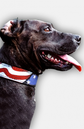 Pitbull Handpainted Leather Collar - American Pride