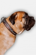 Bullmastiff Collar with Barbed Wire Painting