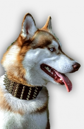 3 inch Extra Wide Leather Siberian Husky Collar with Hand-Set Brass Spikes