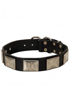 German Shepherd Leather Dog Collar with Vintage Nickel Plates