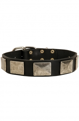 Pitbull Leather Collar with Silvery Massive Plates