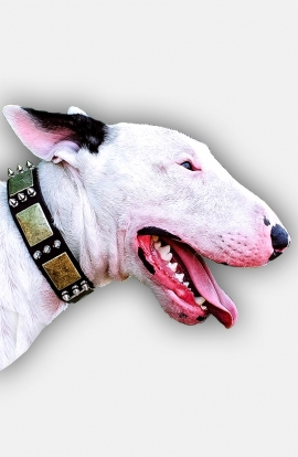 Leather Bull Terrier Collar with Spikes and Old Brass Massive Plates