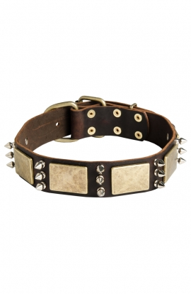Husky Collar with Silver-like Spikes and Old Brass Massive Plates