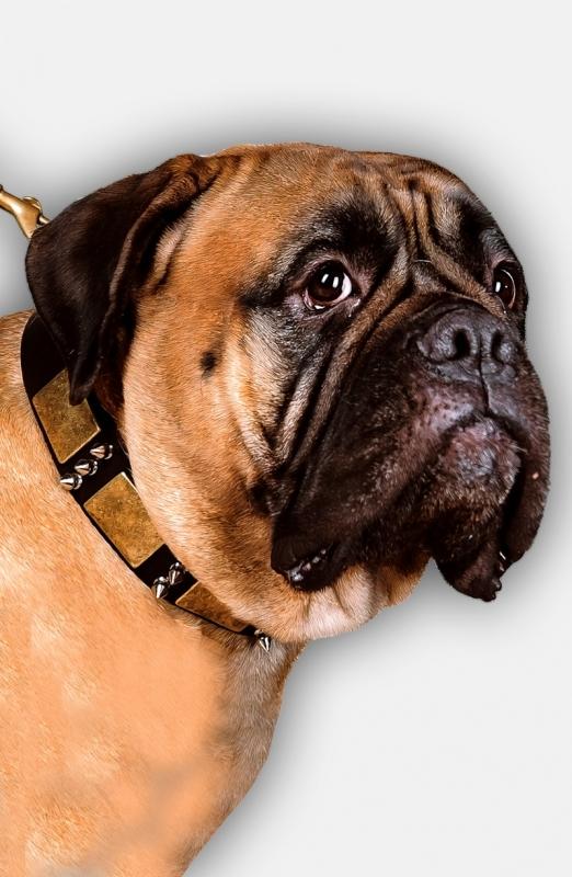Get Gladiator Style Leather Dog Collar For Bullmastiff Walking