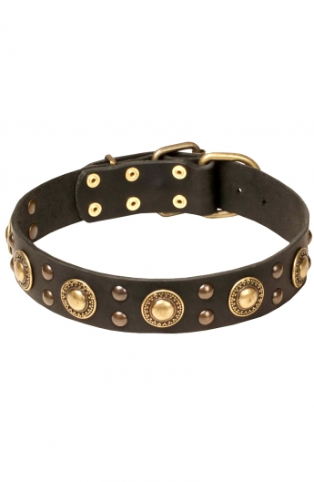 """Studded Dog Collar with Brass Decorations """"Golden Knights"""""""