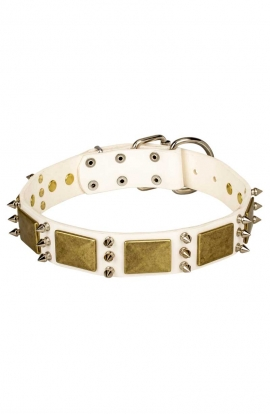 White Leather English Bull Terrier Collar with Spikes and Old Brass Massive Plates