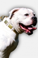 Strong White Leather Dog Collar for American Bulldog