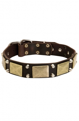 Vintage Leather Doberman Collar with Old Brass Massive Plates and Nickel Plated Cones